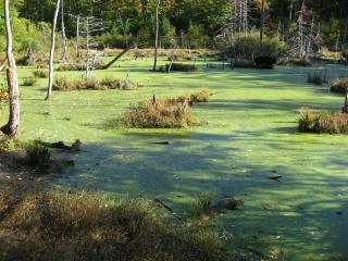 Gatineau Park pond