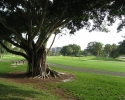 golf course on Longboat Ke