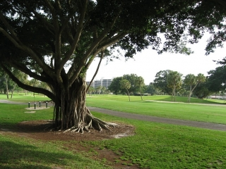 golf course on Longboat Ke