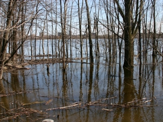Spring flooding near the pathway.