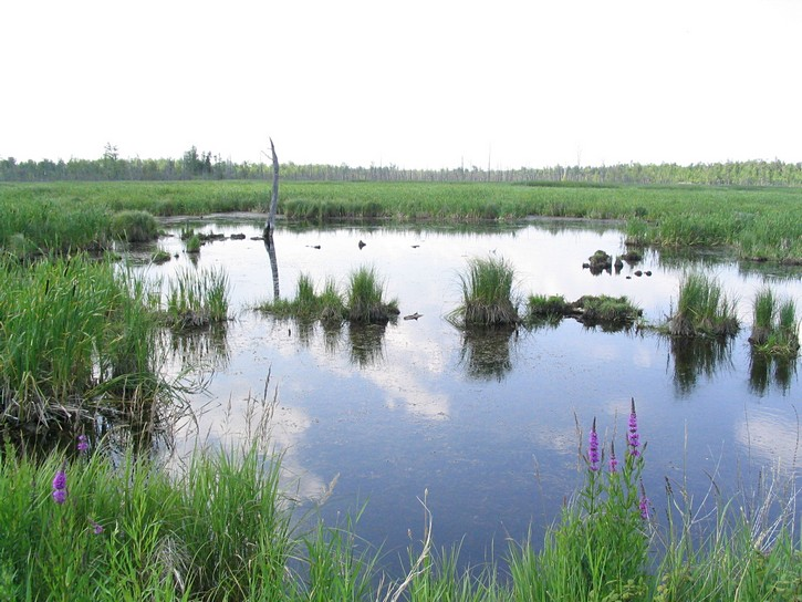 swamp near the Ottawa-Carleton Trailway