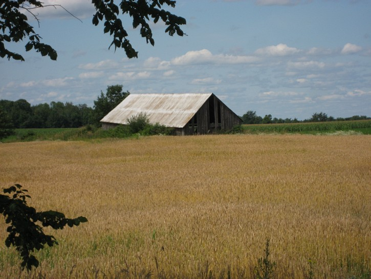 farm field next to the Ottawa-Carleton Trailway