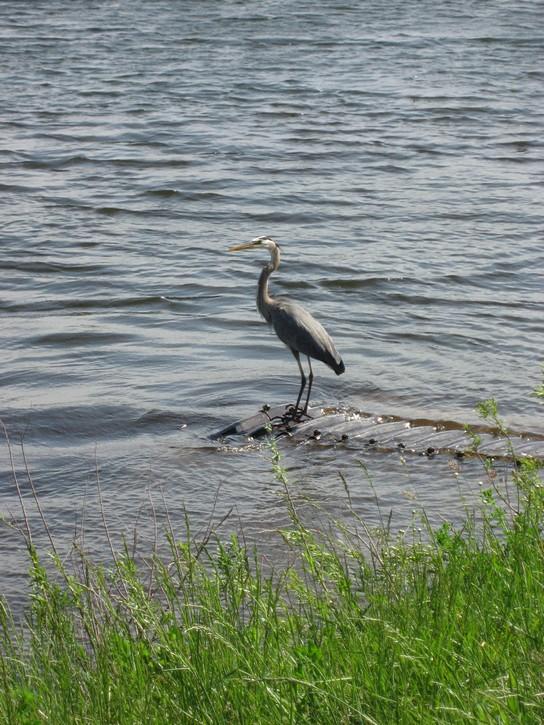 Bird in Upper Canada Migratory Bird Sanctuary.