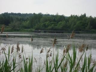 scene in the regional park.
