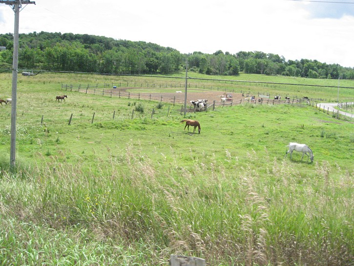 horse ranches on Highway 2
