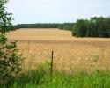 golden farm fields