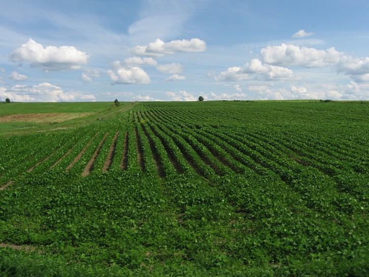 farmland south of Highway 132