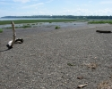 St. Lawrence River at low tide