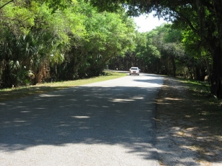 paved road in the Myakka River State Park