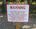 sign about alligators