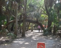 foot path to the canopy walkway