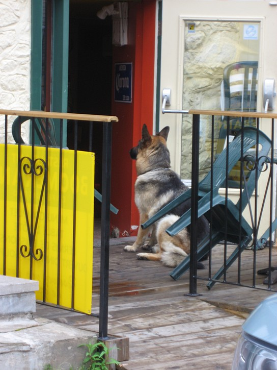 dog waits at pub door