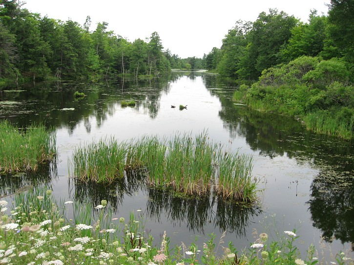 scenery in Rideau Lakes area