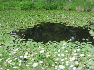 scenery in Rideau Lakes area