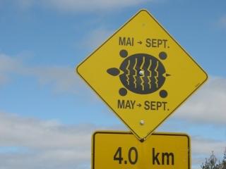 Turtle crossings sign
