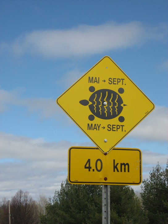 Turtle crossings sign