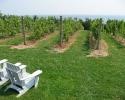 estate wineries
