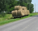 wagon of hay on Wolfe Island