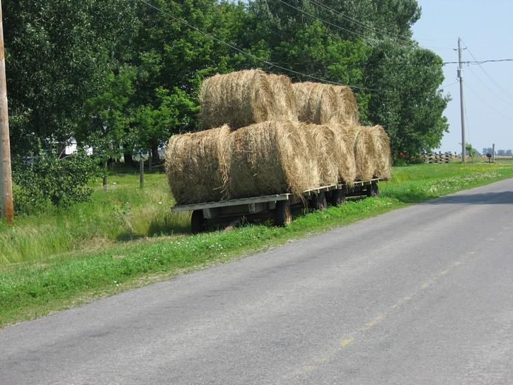 wagon of hay on Wolfe Island