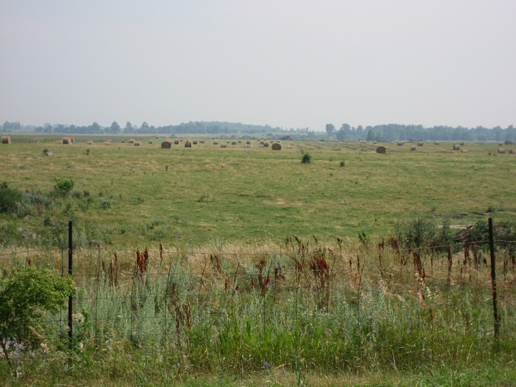 farmland on Wolfe Island